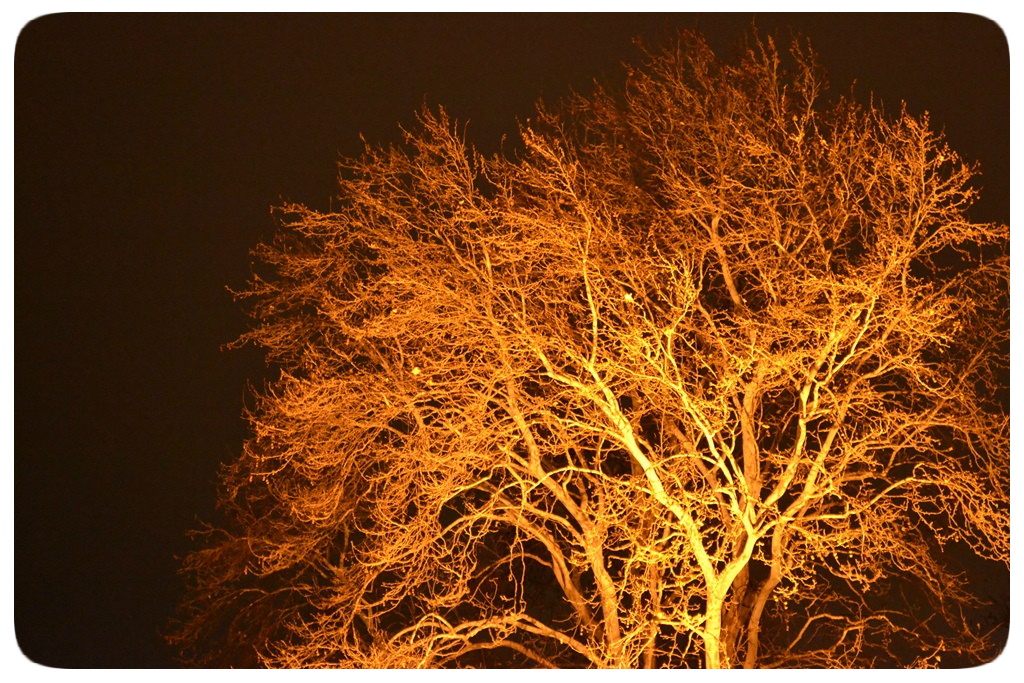 Süleymaniye Ağaç